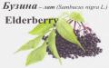 Замороженные ягоды бузины