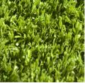 Футбольная трава San Siro