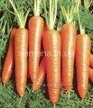 Semillas el juego hortalizas de Borschevaya la cesta, el Artículo УТ000003514