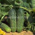Semillas el juego hortalizas la cesta De pepinos, el Artículo УТ000003513