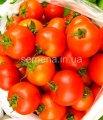 Семена томатов Топспорт F1, Артикул 4621