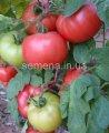 Семена томатов Афен F1, Артикул 6435