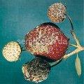 Средство защиты растений Тельдор 50 WG в.г., Артикул 3830