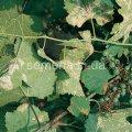 Средство защиты растений Мелоди Дуо, Артикул УТ000001651