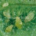 Средство защиты растений Инициатор 200 Т®, таблетки, Артикул 4693