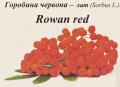 Замороженные ягоды рябины красной