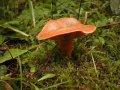 Mrożone grzyby