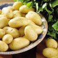 Засухоустойчивый картофель
