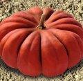 Семена тыквы Мускат де Прованс 0,5 кг. Коуел