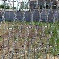 شبكة السياج