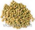 Green lentil 400 gr