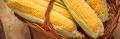 Семена кукурузы «Пионер» Pioneer P9721 ФАО 380