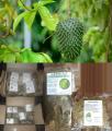 Листья сухие чай Сметанное яблоко / Гуанабана (Guanábana) /Гравиола (Graviola) / Саусеп (Soursop) / Анонна (Annona) 50 г / 100 г