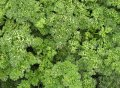 Кудринка / kudrinka — петрушка листовая, semo 1 000 грамм