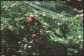 Сетка защита от птиц ORTOFLEX зелёная, размер: ячейки 12х10мм, рулона 10х2м - Италия