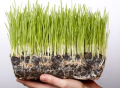 Средства защиты растений Презенс, Укравит, Баер, Сингента, препарат Актара