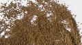 Семена кормовых трав (люцерна, клевер, вика, суданская трава, райграс)