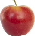 Камера хранения яблок и груш,оборудование для фруктохранилищ под ключ