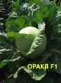 Семена капуста Оракл F1 1000 сем. Clause (Клоз)
