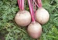Семена свекла Детройт F1 1 кг. Clause (Клоз)