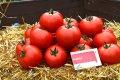 Семена томата Матиас F1 DE RUITER SEEDS 1000 семян