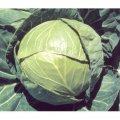 Семена капусты Балбро F1 2500 калиброванныхсемян Nickerson-Zwaan