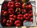 Семена перца  Геркулес F1 Clause 5 грамм