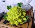 Семена капусты цветной (тип романеско) Вероника F1 Bejo 2500 семян