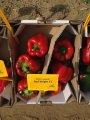 Семена Перца Красный рыцарь  F1 (Red Knight X3R F1) 500 семян Seminis