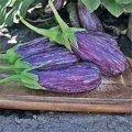 Семена Баклажана Лейре F1, Rijk Zwaan, 1000 семян