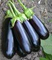 Семена баклажана Нарвал F1, 1000 сем., Lark Seeds