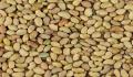 Семена люцерны, семена люцерны сорт Надежда