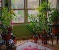 Уход за растениями дома и в офисе