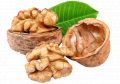Walnut IRBIS