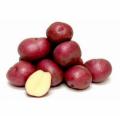 Картопля насіннева сорту Аладін