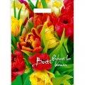 Пакет прорезной Тюльпаны