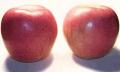Яблоки сорта ФУДЖИ - обладает очень сладким, сортовым, богатым и гармоничным вкусом и великолепным ароматом