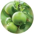 La manzana es fresca, la clase de Semerenk