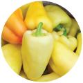 Pepper type Hungarian, grade belezerka