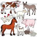 Vitamin feed additive Turboshok Se for KRS, a bird, sheep, pigs, horses, girlfriends