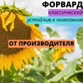 Насіння соняшнику гібрид Форвард