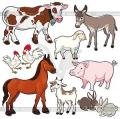 Витамины для с/х животных и птицы Турбошок Se