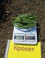 Крокет / kroket - спаржевая фасоль, clause 100 000 семян