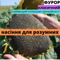 """Насіння соняшнику гібрид Фурор від ТОВ """"АФ НПП АГРОМИР"""""""