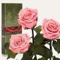 Три долгосвежие розы Florich в подарочной упаковке.Розовый кварц 5 карат, короткий стебель