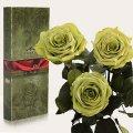 Три долгосвежие розы Florich в подарочной упаковке. Лаймовый Нефрит 5 карат, короткий стебель