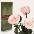 Три долгосвежие розы Florich в подарочной упаковке. Розовый Жемчуг 5 карат, средний стебель