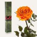 Одна долгосвежая роза Florich в подарочной упаковке. Оранжевый цитрин 5 карат, короткий стебель