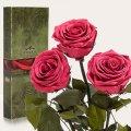 Три долгосвежие розы Florich в подарочной упаковке.Розовый Коралл 5 карат, короткий стебель