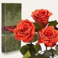 Три долгосвежие розы Florich в подарочной упаковке. Кофейный Топаз 5 карат, короткий стебель